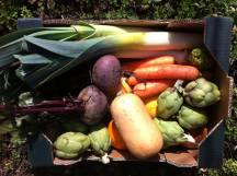 caja verduras organicas