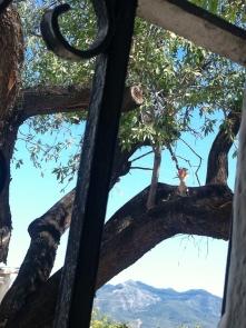 La abubilla, un ave insectívora que también anida en nuestra casa